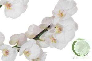 LES ORCHIDEES ET PLANTES VERTES
